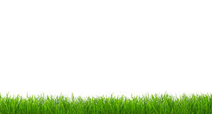 Panorama of grass isolated Stock Images