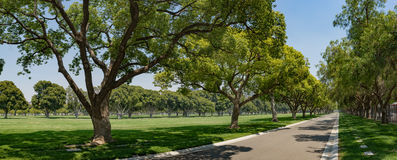 Panorama Grass Tree Park Royalty Free Stock Images