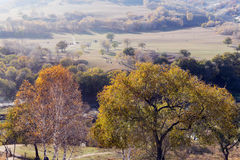 Panorama grassland and forest in autumn Stock Photo