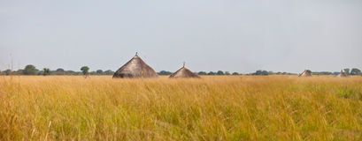 Panorama of grassland of south sudan Royalty Free Stock Photography