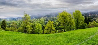 Panorama of grassy hillside above the forest. In mountains. dramatic cloudy sky on a rainy day. dull weather in springtime Royalty Free Stock Photography