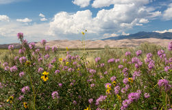 Panorama of Great Sand Dunes NP Royalty Free Stock Photography