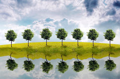 Panorama of green field. With a tree Royalty Free Stock Photo