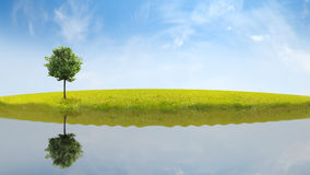 Panorama of green field. With a tree Royalty Free Stock Photography