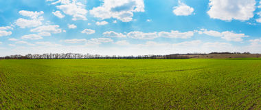 Panorama of green field and blue sky. Panoramic view of spring green field and blue sky Stock Images