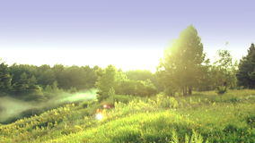 Panorama Of Green Field And Forest Ravine. Royalty Free Stock Photos
