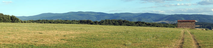 Panorama of green field Stock Images