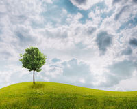 Panorama of green field with a tree. On blue sky background Stock Photography