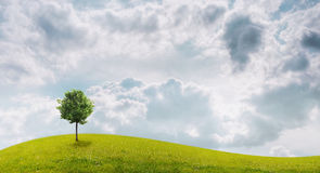Panorama of green field with a tree. On blue sky background Stock Photo