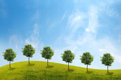Panorama of green field with a trees. On blue sky background Royalty Free Stock Photo