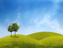Panorama of green field with a trees. On blue sky background Stock Photography
