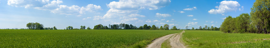 Panorama of green fields. In May Stock Images
