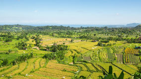 Panorama of the green fields on Bali island Stock Images
