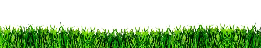 Panorama green grass. On white background Royalty Free Stock Photo