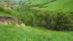 Panorama of green grass at the ravine at the sunny day stock video