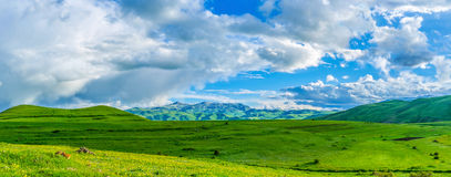Panorama of the green highland stock image