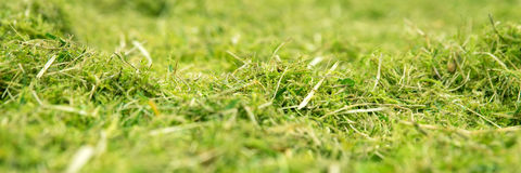 Panorama, green mossy and weedy meadow Royalty Free Stock Images
