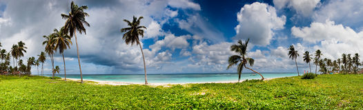 Panorama of green and sand beach with palms. Near a blue ocean Royalty Free Stock Photography