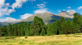Panorama of green trees Royalty Free Stock Images