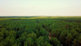 Panorama of green woods stock video footage