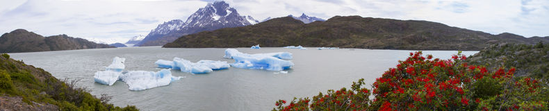 Panorama of Grey Glacier on Grey Lake with blooming fire bushes. Royalty Free Stock Images