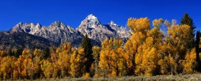 Panorama: Großartiges Teton mit goldenen Espen des Herbstes, Lizenzfreie Stockfotografie
