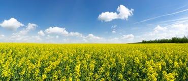 Panorama - großes blühendes Rapsfeld Lizenzfreie Stockfotos