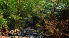 Panorama halna rzeka w dżungli, India, Goa Obraz Royalty Free