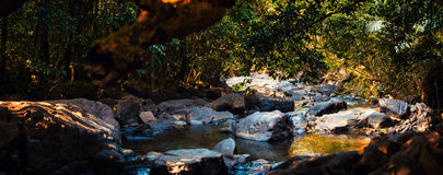 Panorama halna rzeka w dżungli, India, Goa Obrazy Stock