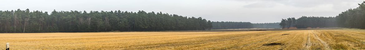 Panorama of a harvested arable land in front of a strip with dense forest stand, with a lot of free space for text, as header for. A website, stitched Stock Images