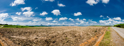 Panorama - Harvested Sugarcane Field Royalty Free Stock Image