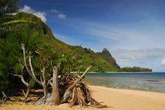 Panorama in Hawaï royalty-vrije stock foto's