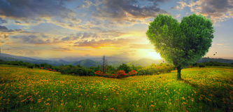 Panorama of a heart tree. A heart shaped tree on a panoramic landscape stock photography