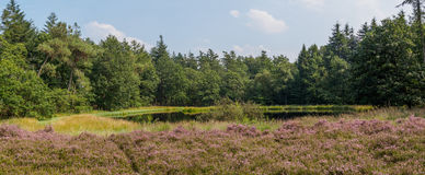 Panorama of heathland, lake and forest Royalty Free Stock Images