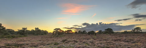 Panorama of heathland landscape Stock Image