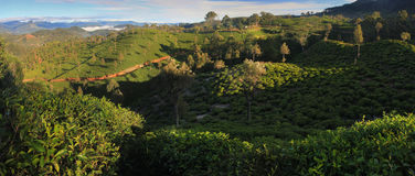 Panorama herbaciane plantacje Zdjęcia Royalty Free