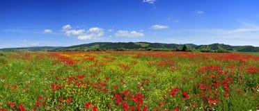 Panorama hermoso con el campo de las amapolas Foto de archivo libre de regalías