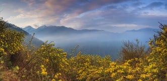 Panorama hermoso de montañas con las flores foto de archivo libre de regalías