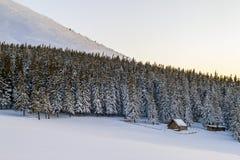 Panorama hermoso del invierno Paisaje con los árboles de pino spruce, azules Imágenes de archivo libres de regalías