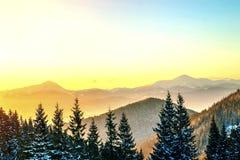 Panorama hermoso del invierno Paisaje con los árboles de pino spruce, azules Fotos de archivo