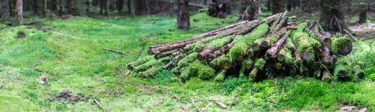 Panorama in het bos met een stapel van hout en een paddestoel Stock Fotografie