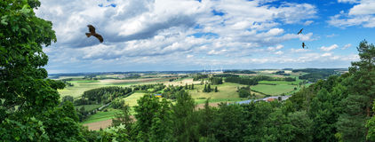 Panorama from a high altitude to a valley with a flying eagle, fields and trees. Hof, Bavaria, Germany. Panorama from a high altitude to a valley with flying stock image