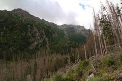 Panorama of the High Tatras Mountains, Slovakia. Panorama of the High Tatras Mountains and forest, Slovakia Royalty Free Stock Images