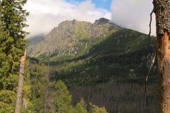 Panorama of the High Tatras Mountains, Slovakia. Panorama of the High Tatras Mountains, view of forest, Slovakia Stock Photos