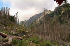 Panorama of the High Tatras Mountains, Slovakia. Panorama of the High Tatras Mountains, view of forest, Slovakia Royalty Free Stock Photos