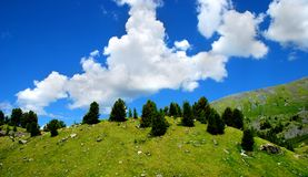 Panorama of hills with fir-trees Royalty Free Stock Image