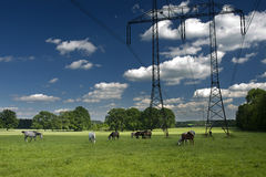 Panorama of horses with Electrical tower Royalty Free Stock Photos