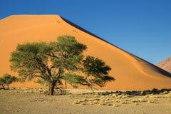 Panorama i Namibia Royaltyfria Bilder
