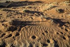 Panorama i Namibia Arkivfoto
