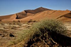 Panorama i Namibia Arkivbild